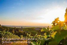 Offenburger Weinwandertag