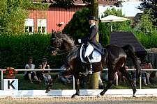 Baden-Württembergische Meisterschaften Springen, Dressur und Pony