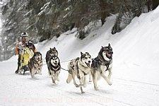 1. Waldhaus-Cup Schlittenhunderennen